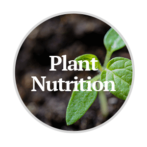 Plant Nutrition Products for Corn and Soybeans